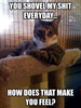 What my cat's really thinking when he stares at me